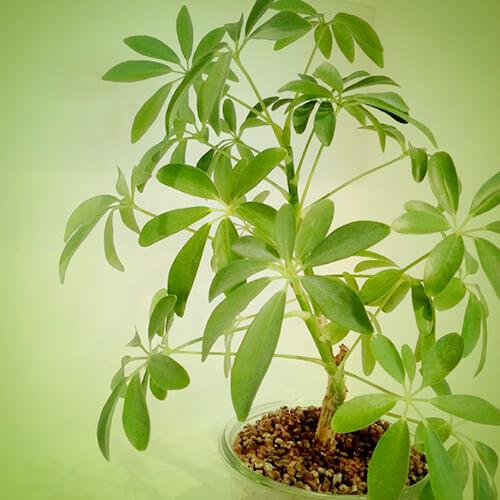 風水に良い観葉植物